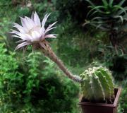 CactusEnFlor.Blog.