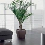 Majesty Palm in Lechuza Quadro Brown