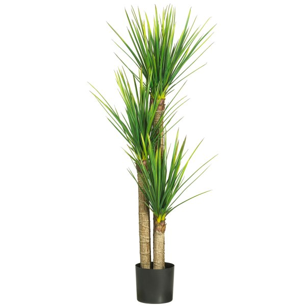 Yucca Cane - 2 Stalk