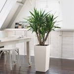 Yucca Cane in Lechuza Cubico White