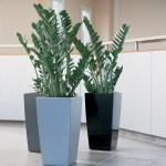 ZZ Plant in Lechuza Cubico Planters