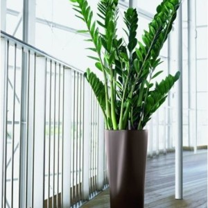 modern-indoor-pots-and-planters