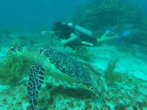 Playa del Carmen Diving