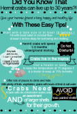 Click here for our cheat sheet with all the basics on crab care.
