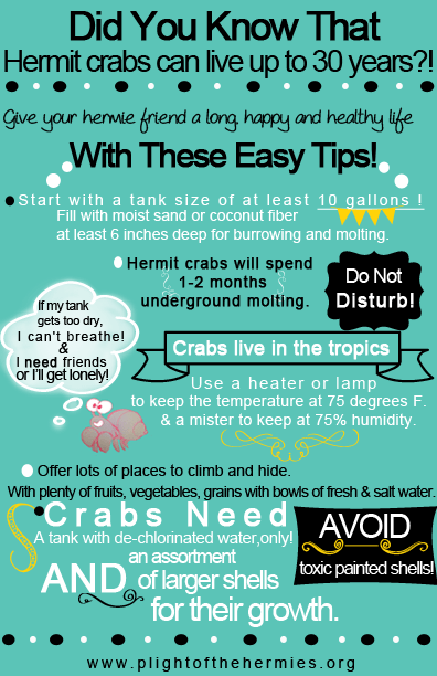 Hermit Crab Care Guide