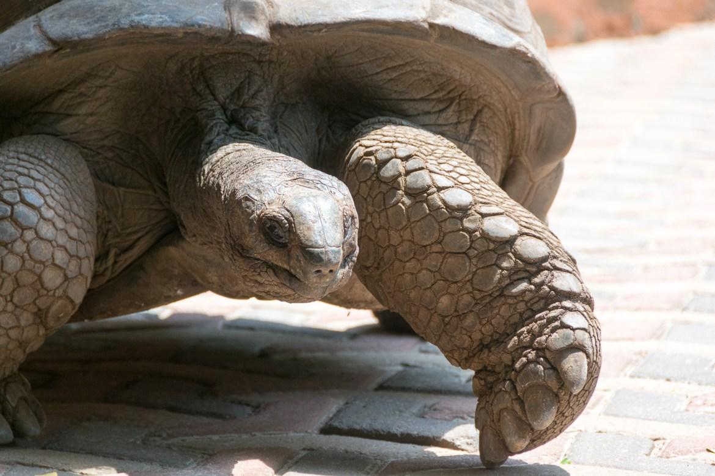 Zanzibar, Africa, turtle