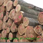 Wood Prices Decreased – Leads to the Reduction of Plywood Prices
