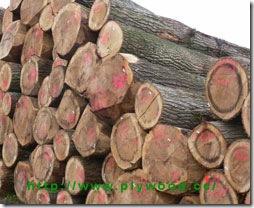 Wood & Logs