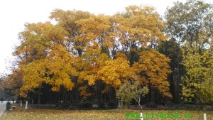 Deciduous Trees