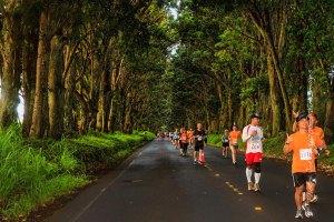 Kauai Marathon runners through the tunnel of trees