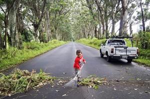 Tree Tunnel Kauai cleanup