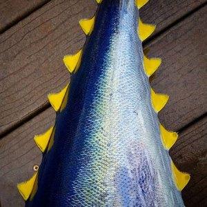Kauai Ahi Yellow Fin Tuna