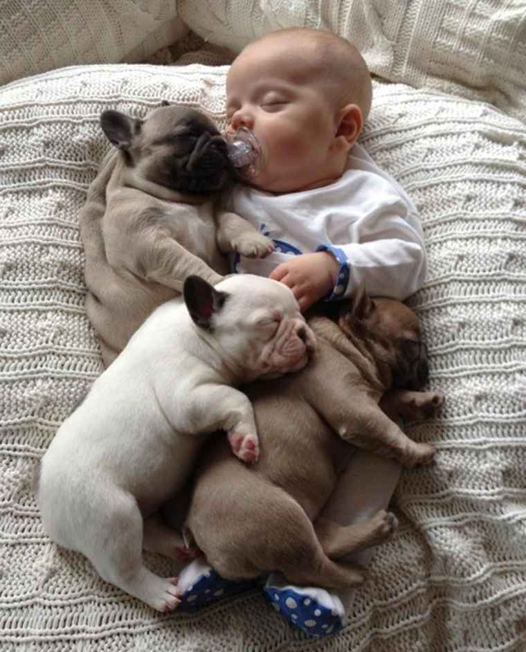 puppies sleeping with baby