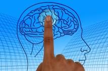 PNL: Usando os dois hemisférios cerebrais