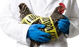 gripe-aviar-hong-kong1
