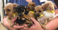 Humane Society for Southwest Washington Thankful for New Banfield Foundation Donation