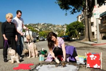 Dog-Wash-on-Alfred-Street72dpi
