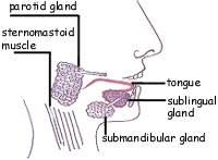 Image of tongue
