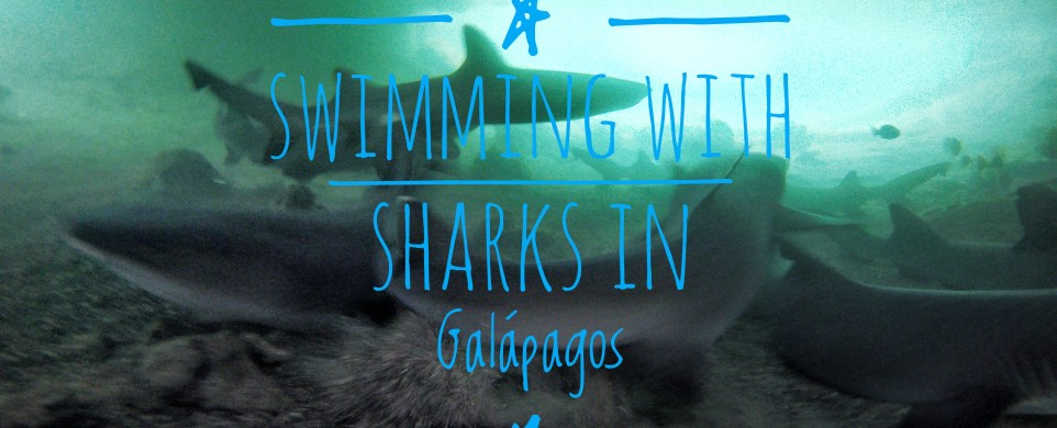 Swimming with sharks and facing the fears.