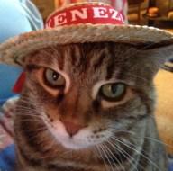 Lulu-Venice Hat - Book Editor