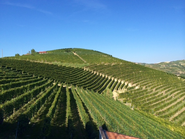 The Hillsides of Langhe (Photo: Penny Sadler)