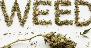 4 Hilarious Myths, why 420 Weed Day is Named So?!