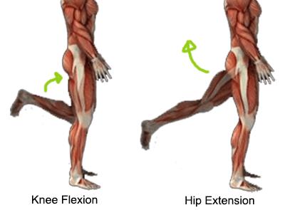 Anatomy of Squats