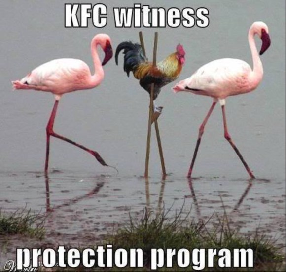 KFC Witness copy