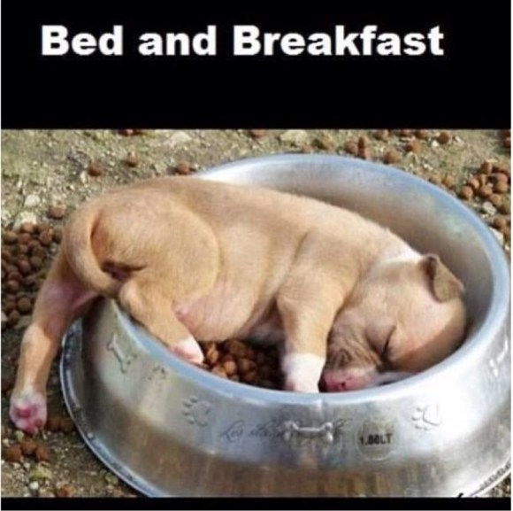 Bed & Breakfast copy