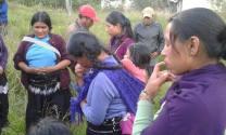 Gobierno de Chiapas se deslinda en su obligación de garantizar la seguridad de familias tzeltales que retornaran a Banavil, Tenejapa.