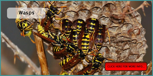 pest control for wasps