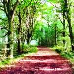 creative writing prompts Image of a woodland path