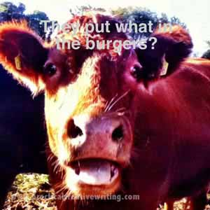 funny image of a cow hearing the news about horse burgers