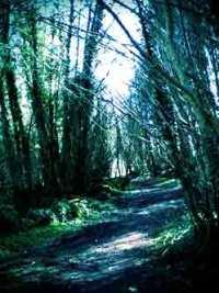 spooky woodlands