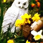 White ornamental owl with daffodils - illustrating article for writers about planning a story