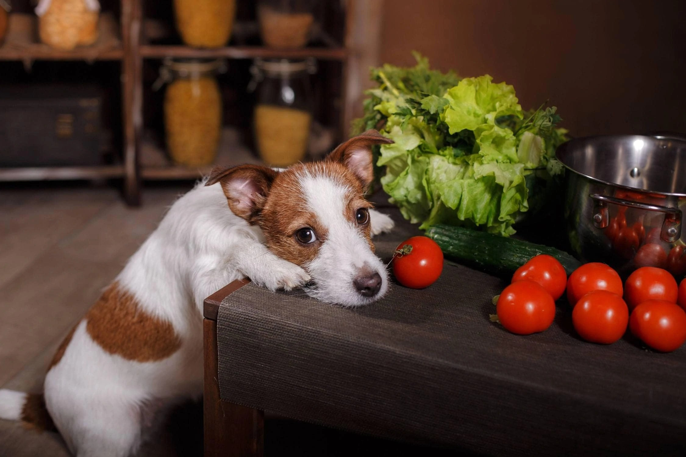 Creative Tomato Sauce Tomato Sauce Can Dogs Eat Mackerel Fact Or Can Dogs Eat Practical Paw Dog Loverstoolkit Fact Or Can Dogs Eat Practical Paw Dog Can Dogs Eat Fish houzz 01 Can Dogs Eat Tomato Sauce