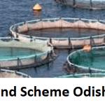Fish farming Loan Subsidy under Fish Pond SchemeOdisha