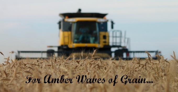 For Amber Waves of Grain…