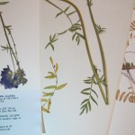herbarium01