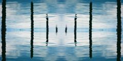 Digital Video Still by Michael Walsh