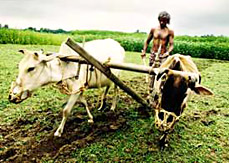 indian-agriculture1_738