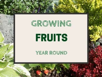growing fruits all year round