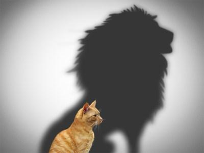 Courageous Convo cat-lion-1024
