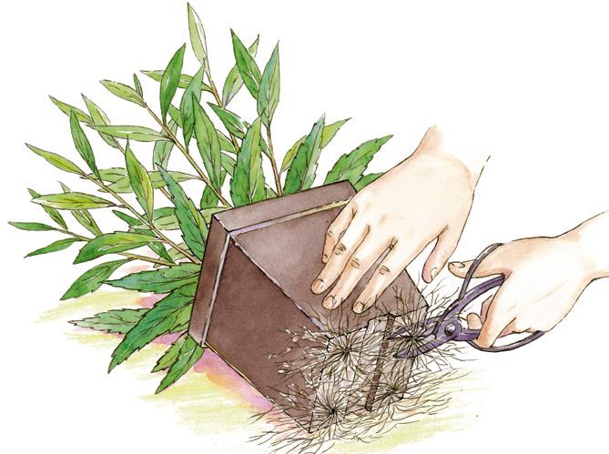 enlever les plantes sans toucher les racines. Black Bedroom Furniture Sets. Home Design Ideas