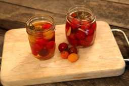pickling tomatoes