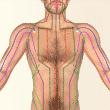 Trouver son équilibre, l'objectif de la médecine chinoise Meridienpoumon-110x110