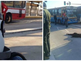 Accidente fatal en Metrobus La Matanza