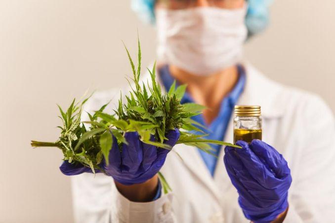 Cannabis medicinal: un paleativo contra el alzheimer, parkinson, esclerosis múltiple, autismo y epilepsia refractaria