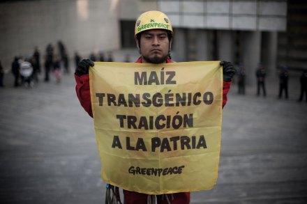 Activistas de Greenpeace escalan la Estela de Luz; protestan contra el maíz transgénico. Foto: Xinhua / Pedro Mera