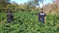 Elementos federales en el sembradío de mariguana. Foto: Especial